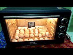 Hatching Eggs In Microwave Oven Homemade Incubator, Diy Incubator, Raising Quail, Raising Chickens, Pet Chickens, Chickens Backyard, Incubating Chicken Eggs, Eggs In Oven, Oven Diy