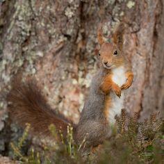 Posing squirrel in sunshine.