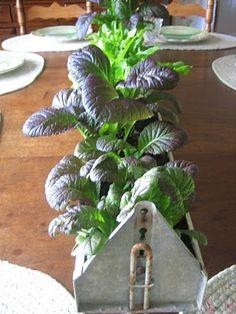 Easy way to grow lettuce and cute for a spring centerpiece. Chicken Feeder Decor, Chicken Feeders, Dining Room Centerpiece, Centerpieces, Grow Lettuce, Rustic Restaurant, Garden Fun, Urban Gardening, Amazing Gardens
