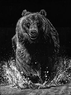 Bear. Scratchboard Drawings of Wild Animals. To see more art and information about Allan Ace Adams click the image.