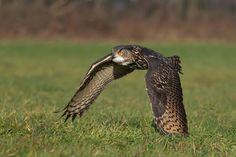 Eagle Owl by Milan Zygmunt. Check his awesome work in 500px