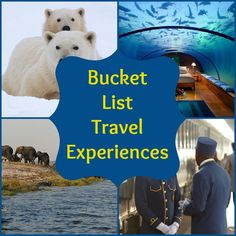 Poloar bears, african safaris & more. What's on your #travel bucket list?