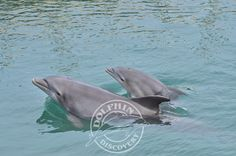 Baby dolphins at Dolphin Discovery center in Puerto Los Cabos, San Jose del Cabo, Mexico