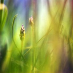 the air smells of lavender. Northern Lights, Lavender, Nature, Shop, Travel, Naturaleza, Viajes, Destinations, Nordic Lights