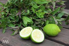 """V kuchyni vždy otevřeno ...: Mátový """" Mojito """" sirup Mojito, Lime, Fruit, Syrup, Limes, Key Lime"""