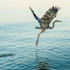 (4) #sea — Photos -- National Geographic Your Shot