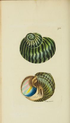 The naturalist's miscellany - Biodiversity Heritage Library