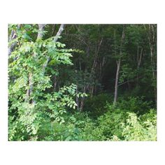 Customizable #2016 #Are #Beyond #Camera #Canon #Caught #Colors #Darkness #Depth #Drenched #Eos #Eye #Foreground #Gloss #Green #Into #July #Memories #Photograph #Premium #Sun #Taken #This #Turn #Walk #Was #With #Woods #Work #Zazzle Premium Wrapped Canvas (Gloss) PHOTOGRAPH OF WOODS available WorldWide on http://bit.ly/2igLdjb