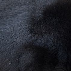 23 close up pictures of the skin of exotic animals: Asiatic Black Bear skin