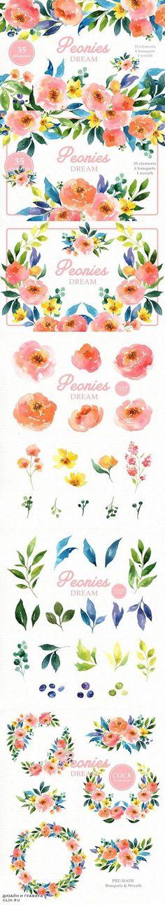 Peonies Dream Watercolor Clipart 1562528
