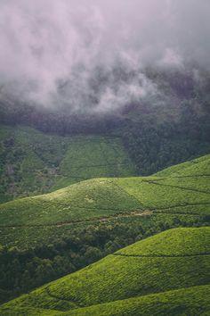 Munnar tea plantations in Kerala, India