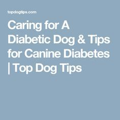 Related posts why peanut butter is bad for your dog what veggies caring for a diabetic dog tips for canine diabetes top dog tips http forumfinder Images
