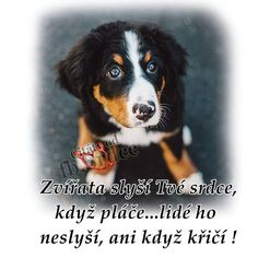 Carpe Diem, Motto, Animals And Pets, Dogs, Quotes, Pets, Quotations, Doggies, Qoutes