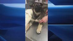 Teen charged in animal abuse case, puppy recovering in Winnipeg veterinary hospital  | Globalnews.ca