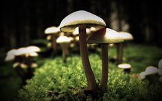 Make Money by Growing Mushrooms : Food and Agriculture ...
