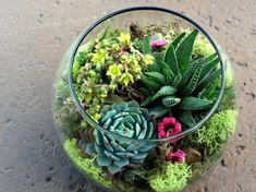 Succulents are best decorative plants which can live longer and require very less care. A succulent terrarium is an awesome small garden inspiration all. Succulent Terrarium, Cacti And Succulents, Planting Succulents, Planting Flowers, Terrarium Centerpiece, Centerpiece Flowers, Air Plants, Garden Plants, Indoor Plants