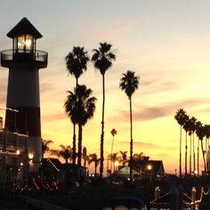 Oceanside CA Palm Trees Sunset California Summer