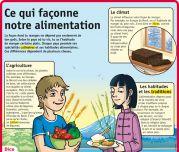 Ce qui façonne notre alimentation - Le Petit Quotidien, le seul site d'information quotidienne pour les 6 - 10 ans !