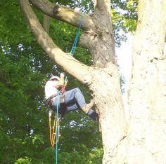 Tree Climbing / Arboriculture