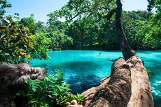 Blue Lagoon (Port Antonio, Jamaica): Top Tips Before You Go - TripAdvisor