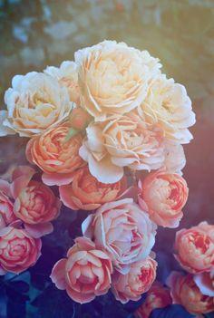 Pink Galaxy Iphone Wallpaper Beautiful pink roses hd wallpaper iphone 6 plus . Wallpaper Iphone Pastell, Love Wallpaper, Trippy Wallpaper, Nature Wallpaper, Cute Backgrounds, Cute Wallpapers, Wallpaper Backgrounds, Iphone Wallpapers, Retina Wallpaper