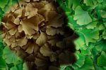 Πώς να εμποδίσετε το Αλτσχάιμερ μέσω της διατροφής Stuffed Mushrooms, Vegetables, Food, Stuff Mushrooms, Essen, Vegetable Recipes, Meals, Yemek, Veggies