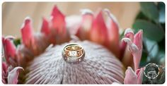 Rickety Bridge, Class Ring, Wedding Ideas, Engagement Rings, Photography, Enagement Rings, Wedding Rings, Photograph, Fotografie
