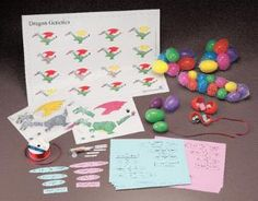 This dragon genetics lab kits from  @wardsscience would make genetics more interactive than just Punnett squares.  #WardsDreamLab