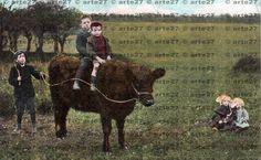 Vintage Ansichtskarte Rough Riders, Buben reiten auf einer Kuh zum direkten digitalen download, 2 dateien von arteaustria auf Etsy