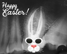 X-ray bunny. Be sure to opt for x-rays at your dental appointments! Adhesive Tooth Implant To Get Dental World, Dental Life, Dental Teeth, Dental Quotes, Dental Facts, Dental Hygienist, Dental Implants, Dental Surgery, Dental Assistant