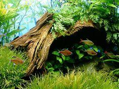 The Freshwater Tropical Fish   Best Tropical Aquarium For Beginners