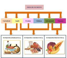Principi nutritivi: i cibi e la loro funzione