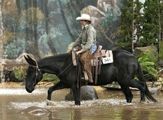 Show Horse Gallery - Porter the Mule