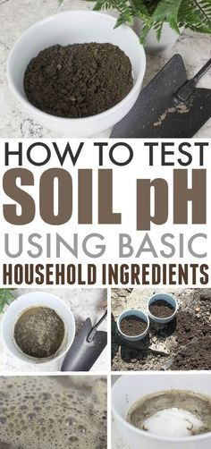 Try this fun method to test soil pH levels in your garden! It can be done in a few minutes at home and requires no special equipment at all. #TestSoilPH #Gardening #Garden