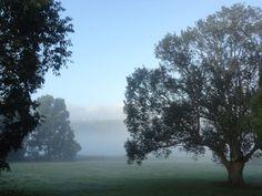 Foggy Photography 18