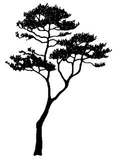 make silhouette tree - Google Search