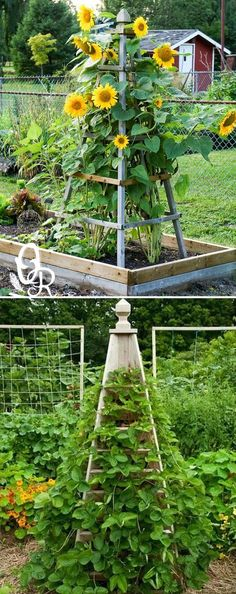 A Pyramid-like Shape Garden Trellis Will Add Elegance to Your Garden