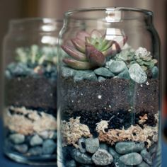 Unique and Creative Succulents In Glass Indoor Garden Ideas Fresh top 10 Succule. Unique and Creative Succulents In Glass Indoor Garden Ideas Fresh top 10 Succulent Decorating Ideas Save On Crafts. Mason Jar Succulents, Mason Jar Terrarium, Succulent Terrarium, Cacti And Succulents, Planting Succulents, Planting Flowers, Mason Jars, Mini Terrarium, Terrarium Ideas