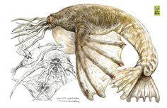 Art by Terryl Whitlatch* Curious Creatures, Alien Creatures, Fantasy Creatures, Monster Book Of Monsters, Dnd Monsters, Creature Feature, Creature Design, Animal Sketches, Animal Drawings