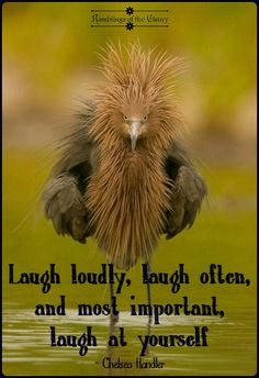 Laugh loudly, laugh often and most important laugh at yourself #laugh #funny #bird