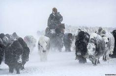 Mongolia's eagle hunters