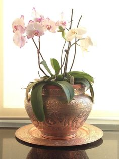 How to care for your orchids: maintenance tips and what not to do