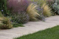 Grasses, salvia, creeping rosemary falling onto deck path