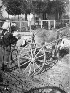 1904. Two children and donkey drawn sulky in front of the Danzero home in Rogers, Arkansas. Courtesy: Missouri State University Archives, Springfield, MO (USA).