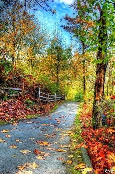 Pathway in autumn [location and photographer unknown]