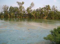 MPCA: Toxic blue-green algae may already be in Minn. lakes