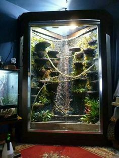 , Vivarium for water dragons.absolutely stunning - , Vivarium for water dragons. Lizard Habitat, Reptile Habitat, Reptile House, Reptile Room, Reptile Cage, Reptile Enclosure, Chameleon Enclosure, Reptile Tanks, Terrariums Gecko