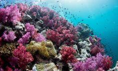 El calentamiento global acaba con más de un tercio de la Gran Barrera de Coral