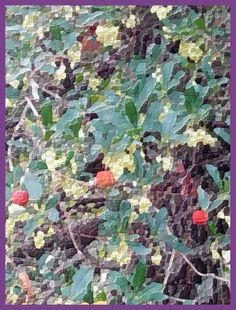 Madroño -- frutos y flores..