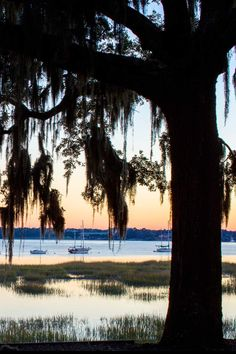Beaufort, South Carolina: A peaceful Low Country town with a stylish new inn. / #52 on @nytimes's list of 52 Places to Go in 2016